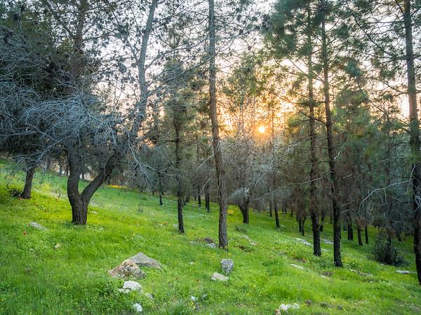 Nazareth Hillside Forest, Israel